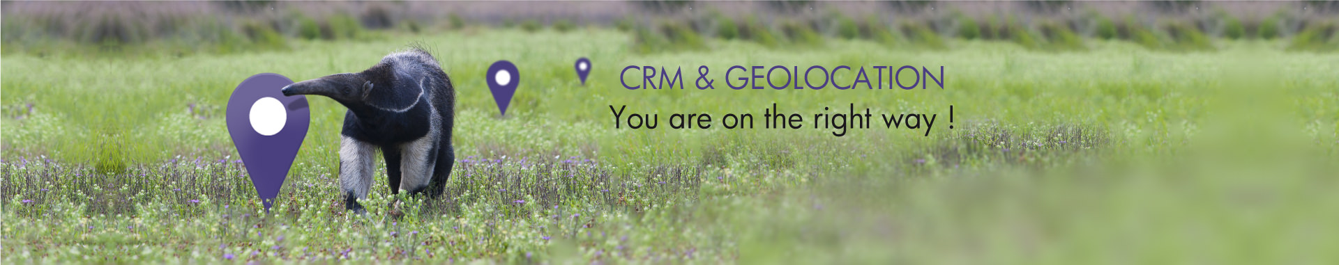 CRM Geolocation