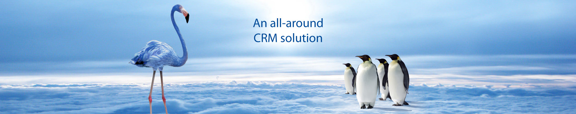 CRM Software :  A complete solution tailored to your activity