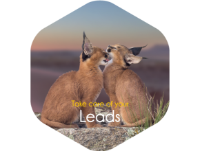 Freshsales software : Take care of your leads !