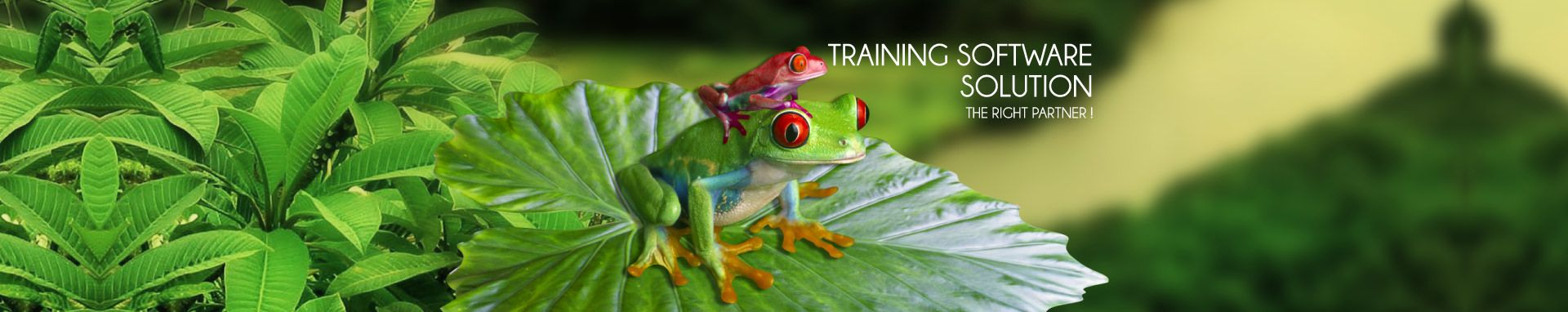 Training management software : the right partner !